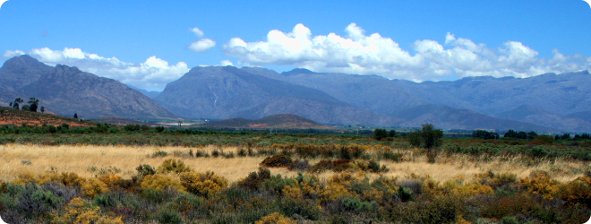 south africa veld